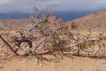 Photo 2007_12_24_Caravane_du_desert_041.jpg