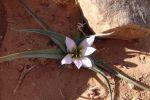 Photo 2007_12_24_Caravane_du_desert_044.jpg